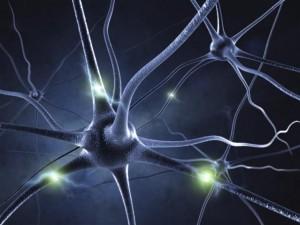 Neural Activity